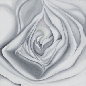 White Rose by Caterina Borghi